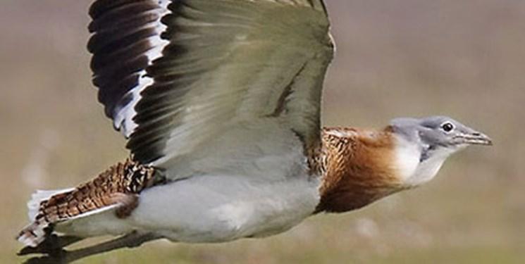 اجرای طرح حفاظت گونههای حیات وحش / 13 درصد عرصه آذربایجان مناطق حفاظت شده است