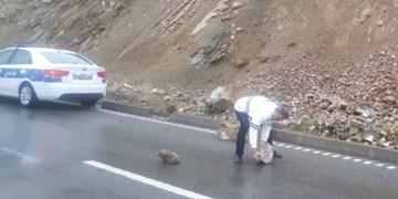 ریزش کوه در جاده امامزاده داوود