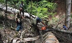 جریمههای سنگین در انتظار قاچاقچیان چوب در زنجان
