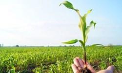 جای واحد تحقیقات در بخش کشاورزی اهر خالی است/  ارادهای برای تسهیل سرمایهگذاری در بخش کشاورزی ندارند