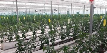 مدرنترین گلخانه هیدروپونیک غرب کشور در نهاوند راهاندازی شد