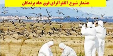 هشدار شیوع آنفلوآنزای فوق حاد پرندگان