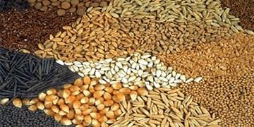 دام و طیور با خوراک داخلی تغذیه میشوند/300 میلیون دلار ارز به کشور بازمیگردد