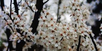 عکس| استقبال آخرین ماهِ زمستان از بهار