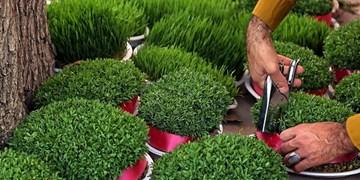 زمان مناسب برای کاشت سبزه نوروز/ چه بذرهایی برای سطوح شیب دار مناسب است؟