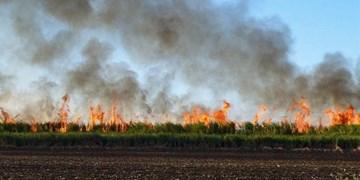 قصه ادامه دار آلودگیهای زیست محیطی نیشکر