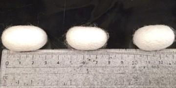 تولید ابریشم مستحکمتر با دستکاری رژیم غذایی کرم ابریشم