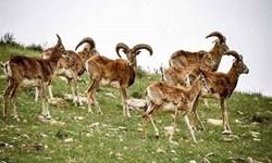 فیلم /جلوه هایی از حیات وحش منطقه حفاظت شده کیامکی