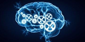 استارتاپها و شرکتهای خلاق علوم شناختی حمایت میشوند