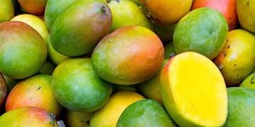 مشخص شدن میزان رسیده بودن میوهها با لیزر و پلاسما