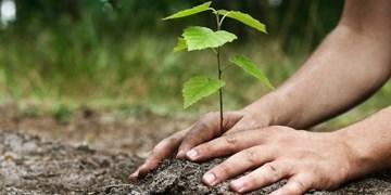 حفاظت از عرصههای طبیعی و توسعه جنگلها ضروری است/ضرورت مشارکت مردم در حفاظت از خاک