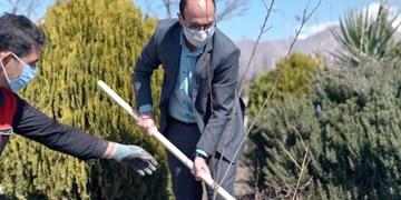 معاون وزارت ورزش درخت کاشت+عکس