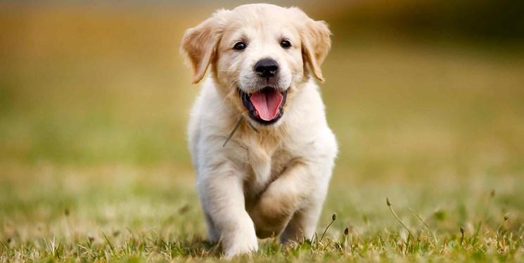 فارسمن| گلایههای مردم از خرید و فروش سگ در فضای مجازی؛ مسؤلان به فکر باشند