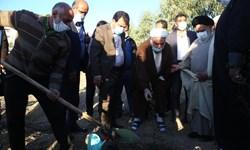 کاشت هزار اصله نهال در مدارس علمیه کشور
