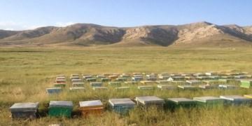 خرید عسل طبیعی از زنبورستان آهوتا