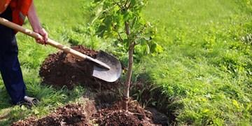 ضرورت معرفی درختان مناسب برای هر منطقه/ تولید ۷ میلیون نهال برای سال۱۴۰۰ در اردبیل