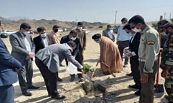 کاشت هزار اصله نهال در رودان