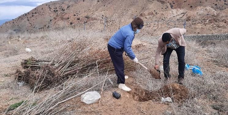 درختانی که جایگزین دپو  زباله  در منطقه گویچاله شدند