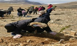 غرس ۲۰ هزار اصله نهال تا پایان امسال در قروه