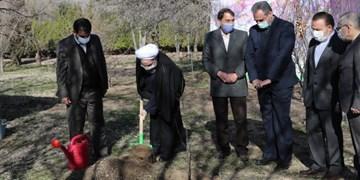 یک روز درختکاری، ۳۶۴ روز تخریب!/ جریان تکنوکرات بعد از انقلاب توسعه را مبتنیبر محیطزیست برنامهریزی نکرد