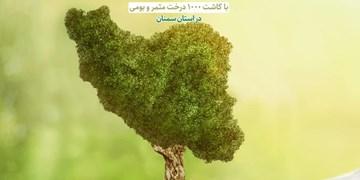 کاشت ۱۰۰۰ درخت در مدارس حاشیه شهر سمنان+ موشنگرافیک