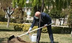 رئیس مجلس یک اصله نهال غرس کرد/ قالیباف: توجه به محیط زیست در اولویت مجلس است
