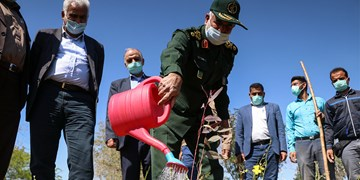کاشت نهال در شرکت کشت و صنعت نیشکر امام خمینی