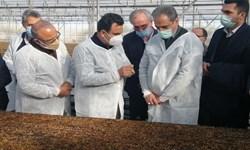 استقبال وزارت جهاد کشاورزی از ایدههای مرتبط با کاهش قیمت گوشت