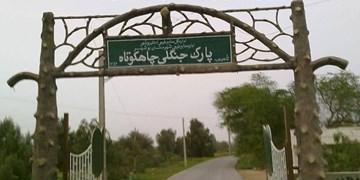 آماده واگذاری پارکهای جنگلی بوشهر هستیم/ پارس جنوبی به تعهداتش عمل نمیکند