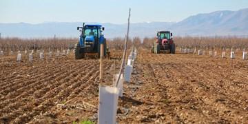 افتتاح بزرگترین باغ گردوی کشت بافت خاورمیانه