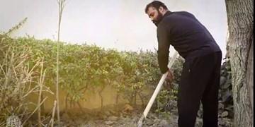 هلالی ۱۵ اصله درخت به یاد شهدا کاشت+فیلم