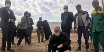 کاشت 110 نهال به یاد اهداگران عضو استان قم
