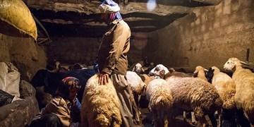 فیلم  دامپزشکی سنتی در بشاگرد
