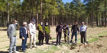 پهنههای سبز میراث جهانی تخت جمشید درختکاری شدند