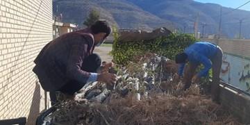 توزیع رایگان 5 هزار اصله نهال  بین باغدران دیشموک در جهت احیاء باغات+فیلم و تصاویر