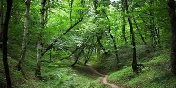 ممنوعیت تجمع در پارکها و تفرجگاههای 117 شهر کشور در 13 نوروز/مسافرت 15 هزار بیمار کرونایی!