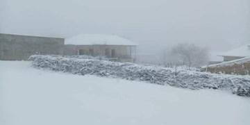زیباییهای بارش برف پایانی سال در مازندران + عکس