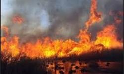 مهار آتش سوزی در منطقه حفاظت شده تالاب نوروزلوی میاندوآب