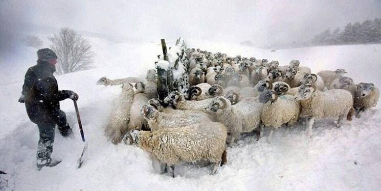 برف و یخبندان در چندین استان/هشدار سازمان هواشناسی به دامداران و باغداران