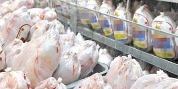 هفت تن گوشت مرغ گرم فردا در زاهدان توزیع می شود