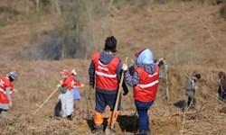 مشارکت دیجیکالا در درختکاری  جنگلهای هیرکانی