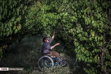 «کاک مسعود خضری» جانباز و معلول نخاعی دوران  دفاع مقدس است که هر روز با ویلچر راهی باغ توت فرنگی شخصیاش میشود و به آن رسیدگی میکند.