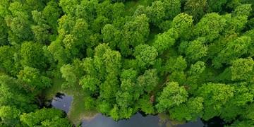 ۱۴ اولویت سازمان جنگلها برای رفع موانع تولید