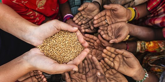 سازمان غله ۱۰ مرکز جدید خرید گندم در خراسان شمالی ایجاد کند