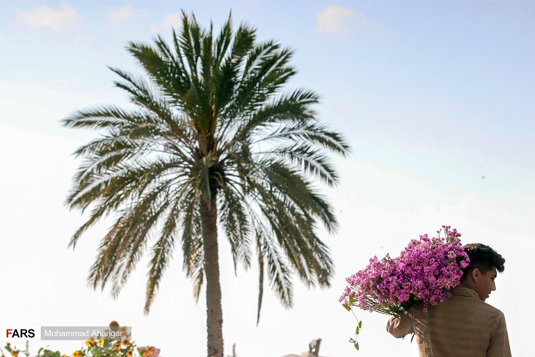 سالانه تقریبا ۱۲۰ هزار گل شاخه بریده از این شهرستان برداشت می شود