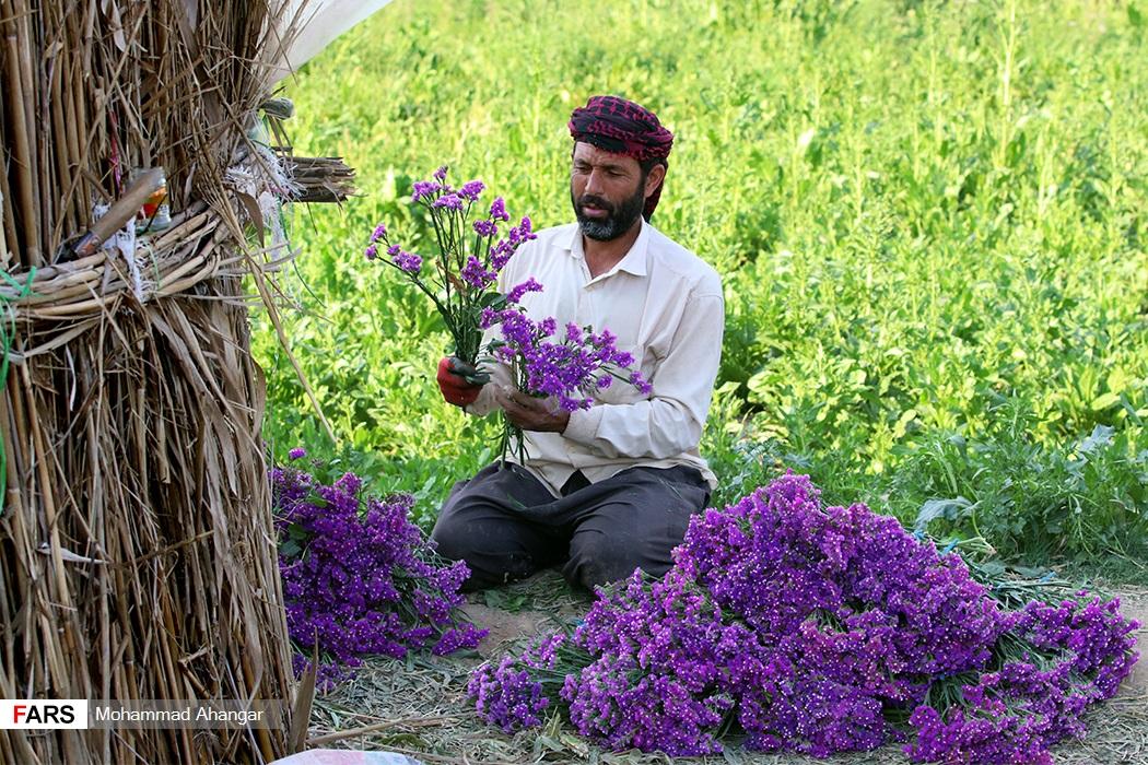 حمیدیه در تولید گل رتبه سوم استان خوزستان را دارد