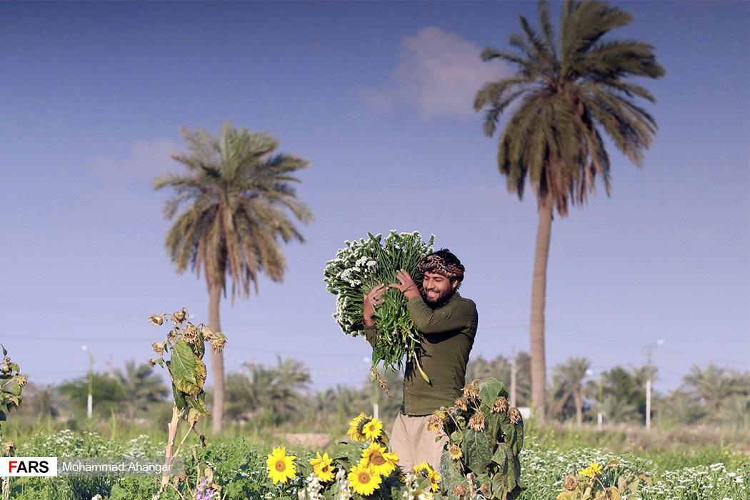برخی از گلها نیز بنا به نیاز خریداران به خارج از کشور نیز صادر میشوند.