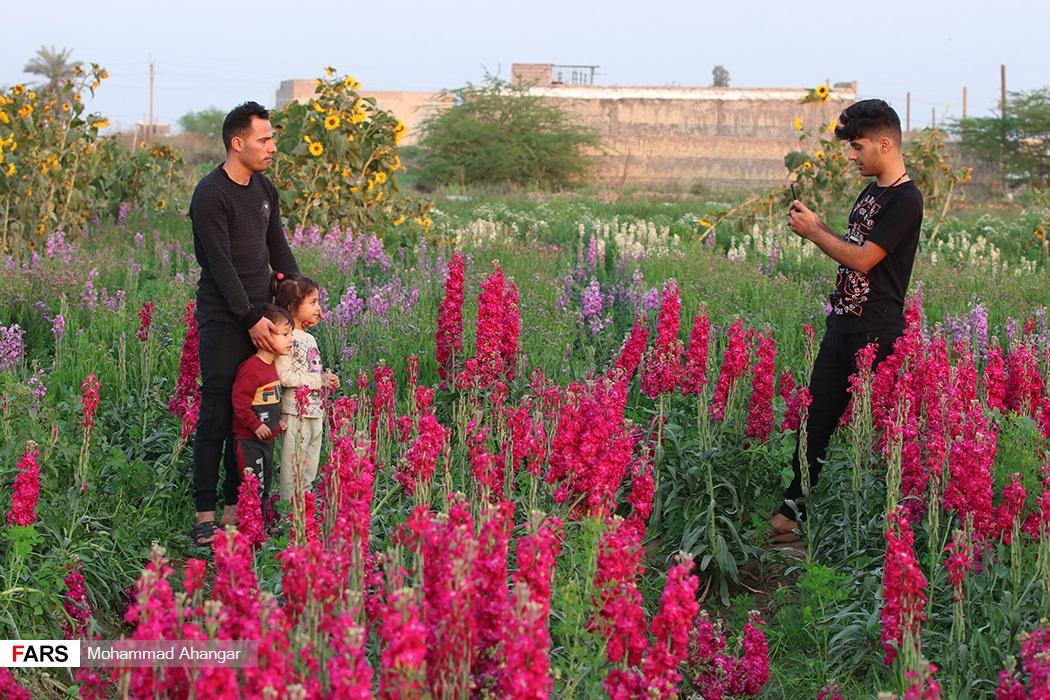 باغ گلهای حمیدیه همه ساله پذیرای گردشگران و بازدیدکنندگان زیادی است