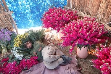 برداشت گل در شهرستان حمیدیه