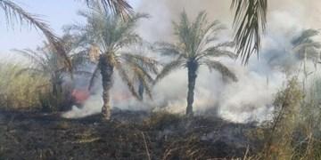 فیلم| آسیب گردشگران به نخیلات هرمزگان/ بروز آتشسوزیهای پی در پی در طبیعت حاجیآباد